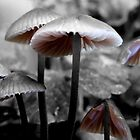little mushrooms in the garden by tego53