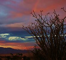 Nature's Palette by Barbara  Brown