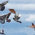 Pigeons in Flight by LOJOHA