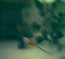 violet by Irina Mashurova