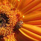 little old lady bug by MommyJen