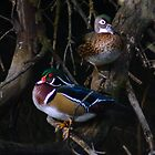 Wood Duck couple by Rich Summers