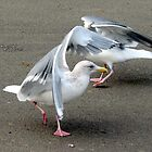 Seagull Pas de deux by Beth Johnston