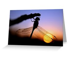 Before Night Falls Greeting Card