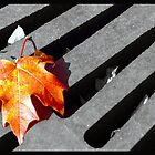 Fall leaf in Greenwood Indiana. by Oscar Salinas