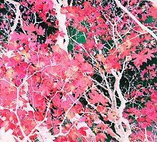 another maple tree  by Patricia Ausweger Matz