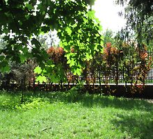 sunny grove by Viento