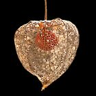 Chinese Lantern by Sarah-Jane Covey