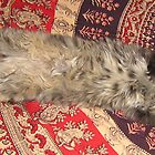 Fluffy stretching gray cat with furry belly by bluegorilla