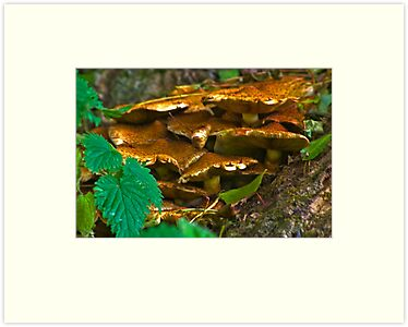 Fungi #A1 by Trevor Kersley