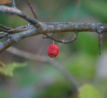 The Last Little Red Berry by deb cole