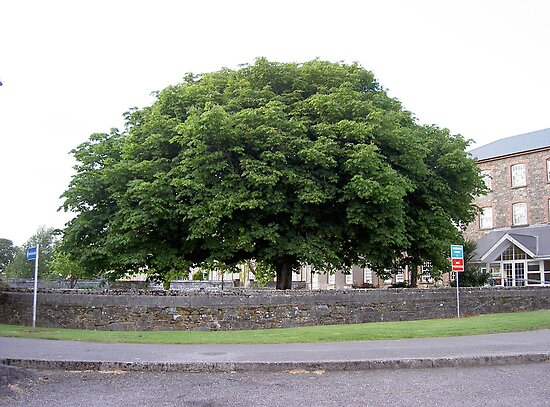 """Gigantic Chestnut""--Youghal-Cork[Please Large View] by Pat Duggan"