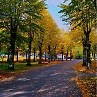 Autumn  by marco10