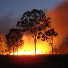fire tree - backburning at Carmila by valandsnake