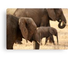 Elephants - Tarangiri National Park, Tanzania - 845, 10/11/10 Canvas Print