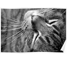 Tiger's Closeup Poster