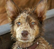 BEDRAGGLED by Helen Akerstrom Photography