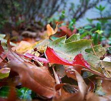 Arrangement of Autumn by Jess Mo