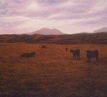 BLACK BULLS OF LLYNN,LOOKING TOWARDS DINAS by PAUL BRADLEY