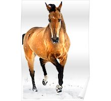 golden horse in snow Poster
