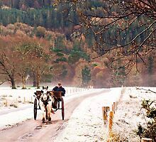 Jaunting Car, Killarney, Co Kerry Ireland by John Walsh, IRELAND