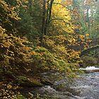 Whatcom Creek Colors by Appel