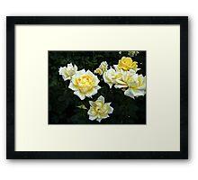 Berolina Rose Framed Print