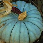 blue green pumpkin by Tracey Hampton