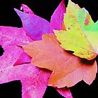 colors of maple leaves by ANNABEL   S. ALENTON
