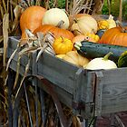 cart full of squash by tego53