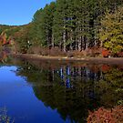 Harriman Pines by photoloi