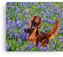 Wild in the Lupine Canvas Print