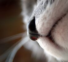 By A Nose © by Vicki Ferrari