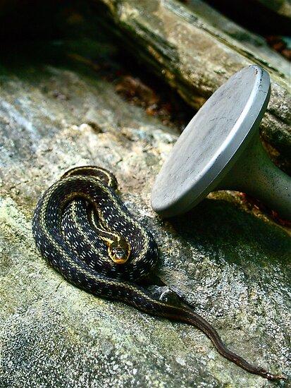 Mr. Snakey McSnakePants. by Amphitrite
