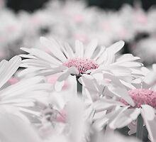 1001 petals  by Aimelle
