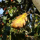 Autumn - yellow leaf, Burntisland 2009 by armadillozenith