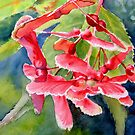 Red Maple Seeds by Ruth S Harris