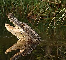 Happy Gator by George  Perina