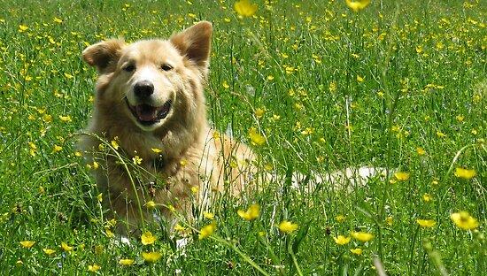 Wildflowers, Slovakia by Fin Gypsy