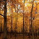 Golden Forest by Jarede Schmetterer