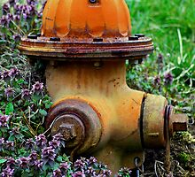 Fire Hydrant And Clover by kjerrellimages