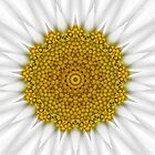 Daisy Kaleidoscope by Jan  Tribe