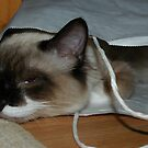Cat in a Bag by LOJOHA