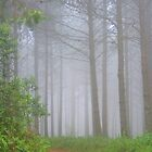 Misty Forest - Magoebaskloof Hiking Trail by Corien
