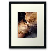 Kisses Framed Print