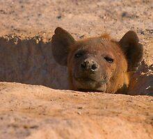 Hyena den by citrineblue