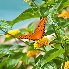 Poolside Butterfly on Lantana by tammykayphoto