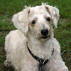 Mollywog the Dog by mollywog