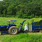 Cut Grass by napah
