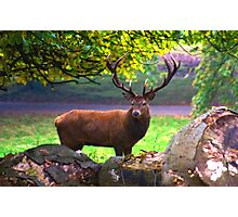 Stag #1   (Red Deer) Photographic Print
